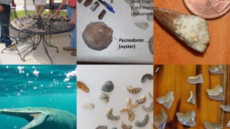 Fossils found in Mississippi!
